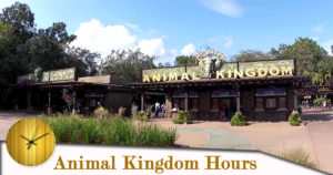 animal kingdom hours